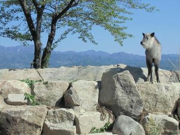 饭田市立动物园 image