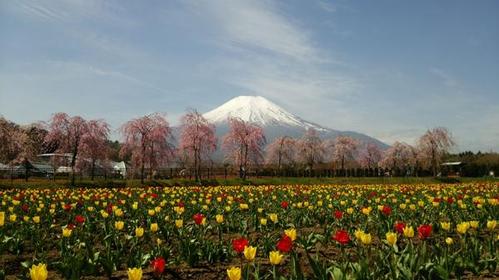 Yamanakako Hananomiyako Park image