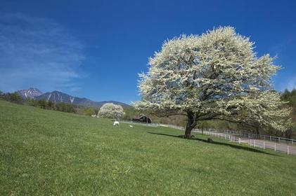 Kiyosato Highland image