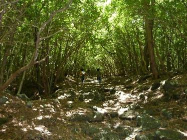 Aokigahara Sea of Trees image