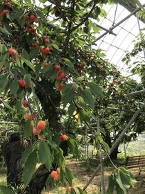 Shimamura Farm image