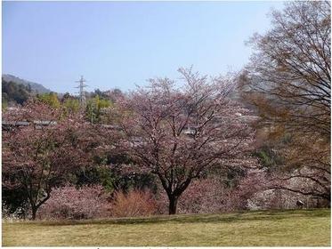 Saruhashi Neighborhood Park image