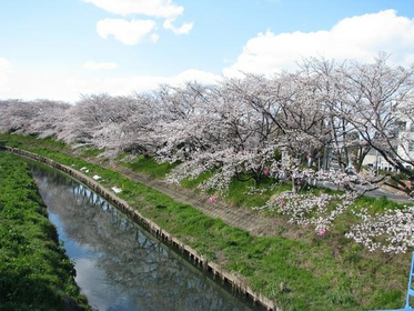 岩倉五条川 image
