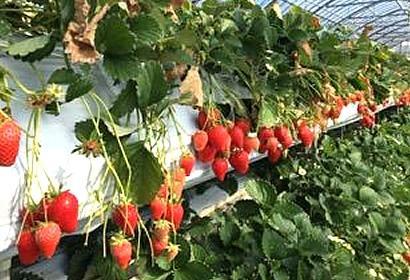 お陽様農園 image