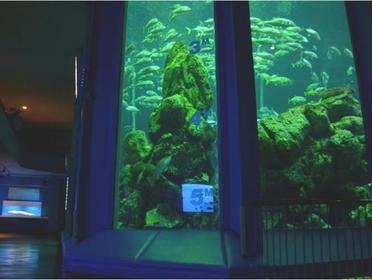 東海大学海洋科学博物館・自然史博物館 image