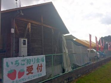 기시가와 관광 딸기 수확 체험 협회 image