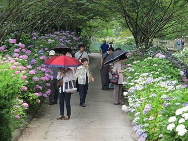 와카야마현 식물 공원 룟카 센터 image