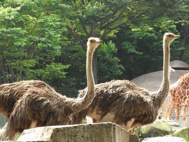东京都 多摩动物公园 image