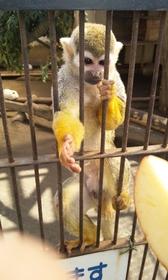 宇都宮動物園 image