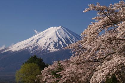Mt. Fuji image