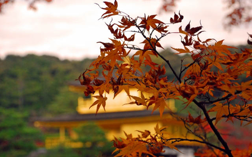 2019 Best Autumn Color Spots at the UNESCO World Heritage Sites surrounding Kinkakuji Temple