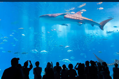 Japan Below Sea Level, the Country's 5 Best Aquariums