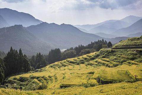 Japan's 5 Most Beautiful Rice Terraces