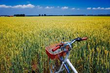 広大な土地でのサイクリングは気持ちがいい。