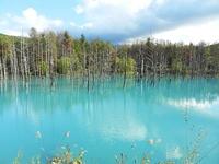 水面が青く見える不思議な池「白金青い池」