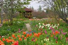 花と緑とグルメを堪能する、十勝ガーデン巡り1日コース!