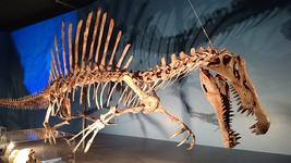 日本初公開全身復元骨格「スピノサウルス」