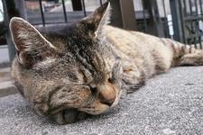いたるところに尾道生まれの猫の姿が!