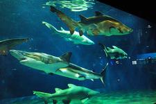 日本一と言われているサメの水槽