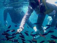 珍しい魚たちがこんなにたくさん!