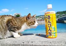 奥武島で暮らす猫 人慣れしてます