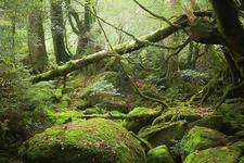 「白谷雲水峡(通称・もののけの森)」