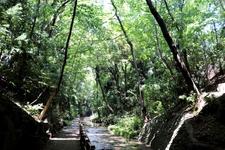 東京23区内で唯一の渓谷「等々力渓谷」