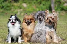 軽井沢で愛犬同伴で宿泊できるホテル・コテージ・キャンプ場や飲食店、観光名所情報