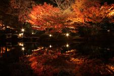 太田黒公園 夜の紅葉ライトアップ