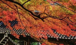 長谷寺と紅葉のコントラスト