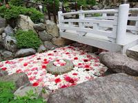 4月中旬~5月上旬に開かれる「華の池」