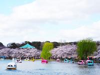 上野桜まつり
