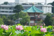 上野公園の景色を楽しみながら。