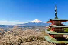 「新倉山浅間公園」は桜の時期におすすめ。