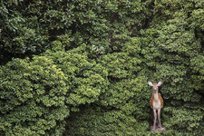 人懐っこくて可愛い鹿が!