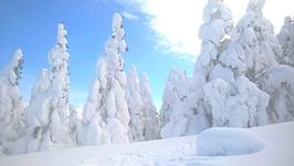 八甲田ロープウェーから樹氷が見えます。