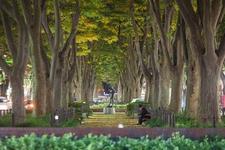 美しいケヤキ並木と彫刻が点在。