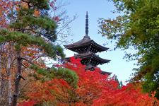 紅葉の季節に特におすすめの五重塔