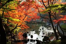 都内で楽しめる紅葉が美しい日本庭園5選