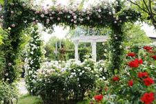 【関東】春休みは癒しを求めて植物園へ!気軽に行ける植物園10選