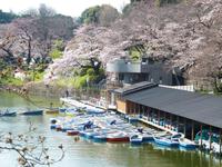 全国の桜のライブカメラ