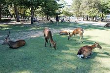 公園内でリラックスする鹿たち