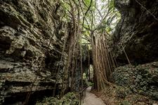 【沖縄】鍾乳洞跡に広がるジャングル『ガンガラーの谷』ガイドツアー