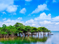 【沖縄】人気の離島「西表島」ってどんな場所?亜熱帯のジャングルと星砂の浜キャンプがおすすめ!