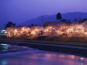 小矢部川公園千本桜