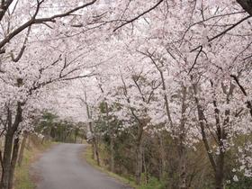 真道山千本桜