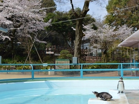 横浜市立野毛山動物園・野毛山公園