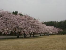 能登町柳田植物公園