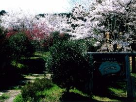 古城山(水口岡山城跡)