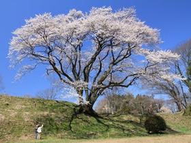 鉢形城公園(エドビガン)